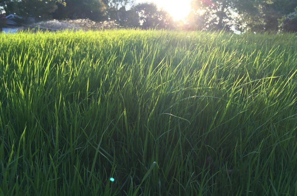 How to care for your hydroseeded lawn